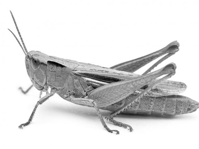 Bigger Than the Grasshopper and the Ant: A Macroeconomic View of Saving for Retirement